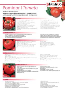 Pomidor I Tomato