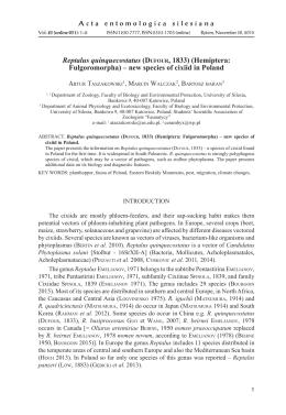 Reptalus quinquecostatus (DUFOUR, 1833) (Hemiptera