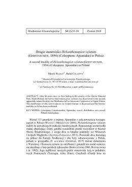 Drugie stanowisko Helianthemapion velatum (GERSTAECKER, 1854)