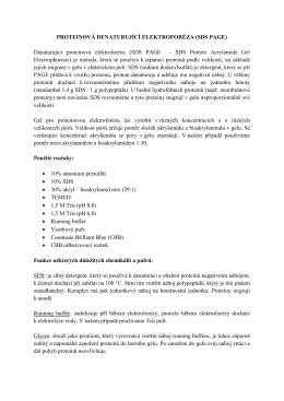 PROTEINOVÁ DENATURUJÍCÍ ELEKTROFORÉZA (SDS PAGE