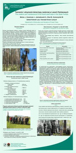 Tworzenie i utrzymanie leśnej bazy nasiennej w Lasach