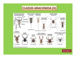 CLASSIS ARACHNIDA (II)