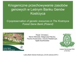 chmielarz paweł - poland - Leśny Bank Genów Kostrzyca