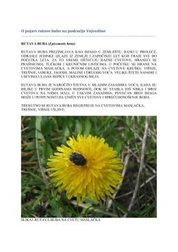 Zelena prognoza 05042016