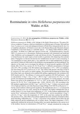 Rozmnażanie in vitro Helleborus purpurascens Waldst. et Kit.