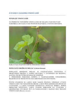Zelena prognoza 09052016