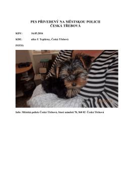 Hledá se majitel nalezeného psa