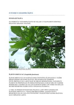 Zelena prognoza 30052016