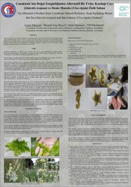 Sideritis trojana - Uluslararası Gıda Ar