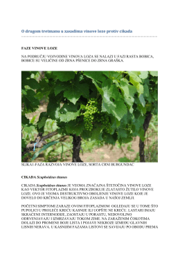 O drugom tretmanu u zasadima vinove loze protiv cikada