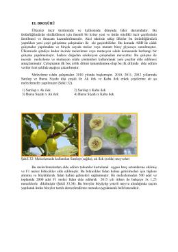 EL BROŞÜRÜ Ülkemiz incir üretiminde ve kalitesinde dünyada lider