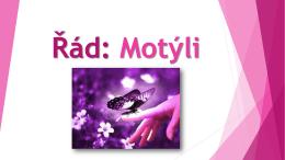 Řád: Motýli