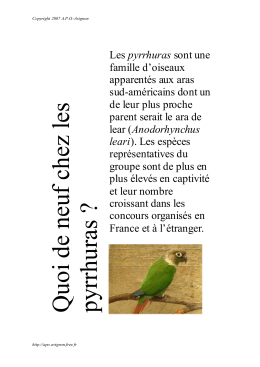Quoi de neuf chez les pyrrhuras ? - APO-Avignon