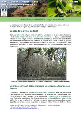 Nombreuses attaques de pyrale du buis en région Auvergne