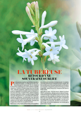 la tubéreuse - Grasse Institute of Perfumery