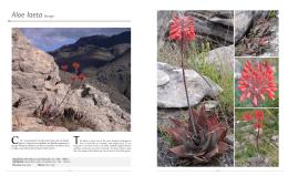 laeta - Les Aloe de Madagascar