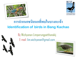 การจำแนกชนิดนกที่พบในบางกระเจ้า - สมาคมอนุรักษ์นกและธรรมชาติแห่ง