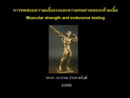 การทดสอบความแข็งแรงและความทนทานของกล้ามเนื้อ Muscular strength