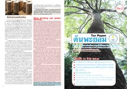 วารสารต้นพะยอม ฉบับที่ 2 - มหาวิทยาลัยทักษิณวิทยาเขตพัทลุง