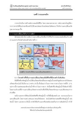 respiratory system - โรงเรียนมหิดลวิทยานุสรณ์