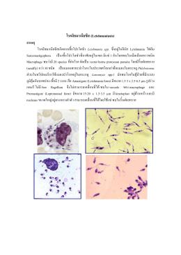 โรคลิชมาเนียซีส (Leishmaniasis) สาเหตุ