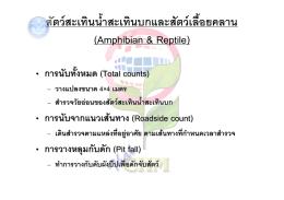 สัตว  สะเทินน้ําสะเทินบกและสัตว  เลื้อยคลาน (Amp