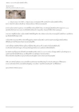 D480601: รายงานการสำรวจเส้นทางเดินสัตว์ป่าครั้งท