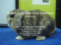 Rabbit Gastrointestinal Syndrome