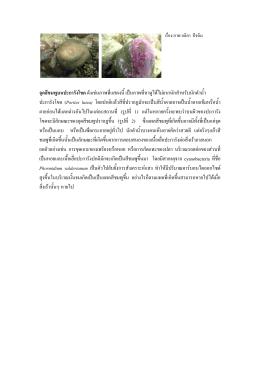 จุดสีชมพูบนปะการังโขดดังเช  นภาพที่แสดงนี้เ
