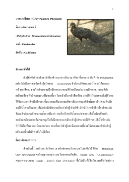 นกแว่นสีเทา - กรมอุทยานแห่งชาติ สัตว์ป่า และพันธุ์พืช