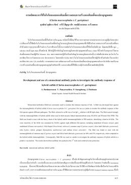 การผลิตและการใชçโมโนโคลนอลแอนติบอดี้ตรวจสอ (C