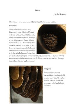 ผึ้งโพรง วิภารัตน์ฉัตรปวงคา ผึ้งโพรง (Eastern honey bee, hiv