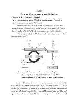 ใบความรู   เรื่อง การสลายโมเลกุลของสารอาหารแบบไม  ใช  ออกซิเจน 4