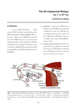 Developmental Biology (Day1-28, developmental genetics)
