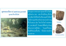 ยุคแคมเบรียน (Cambrian period) ยุคของไทรโลไบต์