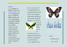 ผีเสื้อ (แมลง)(butterfly), ชื่อ แมลงทุกชนิดในอันดับ Lepi