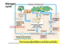 กิจกรรมของจุลินทรีย์ต่อวงจรไนโตรเจนในดิน