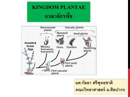 คู่มือการเรียน เรื่องอาณาจักรพืช