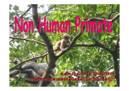 Non Human Primate
