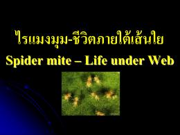 ไรแมงมุม-ชีวิตภายใต้เส้นใย Spider mite – Life