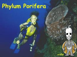 Phylum Porifera อ.แน็ต