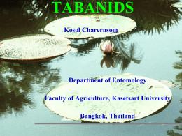 Tabanus - มหาวิทยาลัยเกษตรศาสตร์