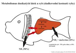 2.Metabolismus dusíkatých látek u ryb