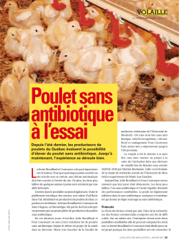 Poulet sans antibiotique à l`essai