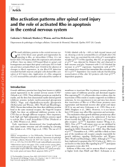 Rho activation patterns after spinal cord injury and the role of