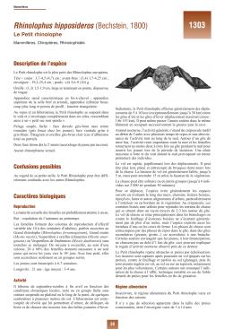 Caprimulgus europaeus Linnaeus, 1758 - INPN