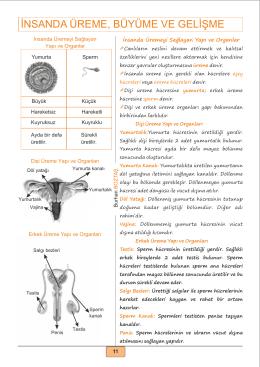 Ders Notu PDF - Fen Okulu |www.fenokulu.net