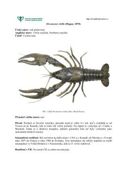Orconectes virilis - Invazní druhy